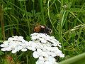 Mulfingen Insekt hinten rot 2.jpg