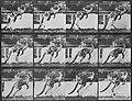 Muybridge, Eadweard - Springendes Känguru (0.64 Sekunden) (Zeno Fotografie).jpg