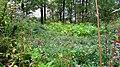 Mytishchinsky District, Moscow Oblast, Russia - panoramio (104).jpg