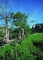 NRCSCO01033 - Colorado (1453)(NRCS Photo Gallery).jpg