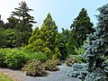 National Arboretum in June (23277705530).jpg