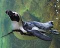 National Aviary (13020028425).jpg