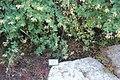 National Botanic Garden of Israel 01.jpg