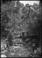 Native bush with a rustic bridge over the Korokoro Stream, and a group standing on and below the bridge. ATLIB 286725.png
