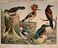 Natural history of the animal kingdom for the use of young people (Plate VIII) (5974387685).jpg