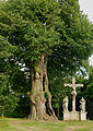 Naturdenkmal - Linde am Kalvarienberg in Ahaus (06).jpg