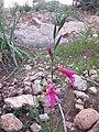 Nature des Monts Beni Chougranes Mohammadia 27.jpg