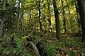 Nature reserve Ptaci stena in autumn 2011 (22).JPG