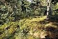 Nature reserve Rájecká rašeliniště in summer 2014 (13).JPG