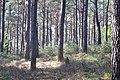 Naturpark und Biosphärenreservat Pfälzerwald - panoramio (15).jpg