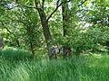 Naturschutzgebiet Heuckenlock 21.05.2014 20.JPG