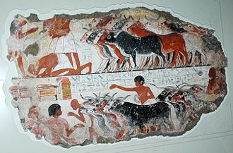 Ancient Egyptian cattle - Scene showing the presentation of Egyptian cattle to Nebamun