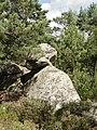 Nemours (77), forêt communale 4.JPG