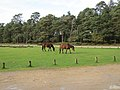 New Forest, Hampshire (460995) (9455045343).jpg