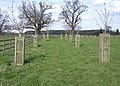 New trees at Geldeston Hall - geograph.org.uk - 977589.jpg