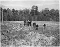 Newberry County, South Carolina. CCC enrollees planting kudzu on gully bank on C. C. Spoon's farm. . . . - NARA - 522757.tif