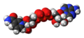 Nicotinamide adenine dinucleotide anion spacefill.png