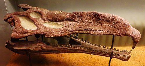Nicrosaurus