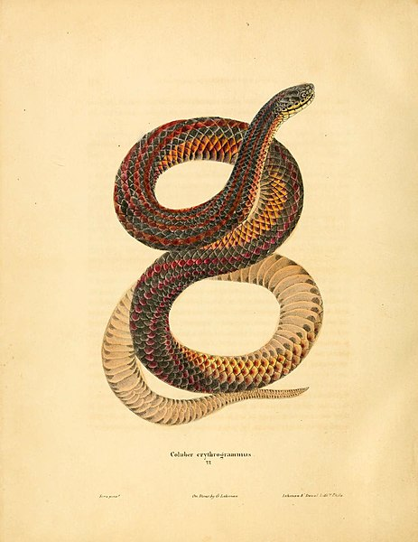 File:North American herpetology, or, A description of the reptiles inhabiting the United States (6046063029).jpg