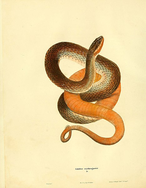File:North American herpetology, or, A description of the reptiles inhabiting the United States (6076428326).jpg