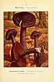 Nouvel atlas de poche des champignons comestibles et vénéneux (Pl. 37) (6459640005).jpg