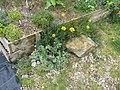 Nursery (13960140674).jpg