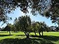 OIC morley abinger park 1.jpg