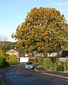 Oak tree, Pine Road, Alderholt, Dorset - geograph.org.uk - 1039231.jpg