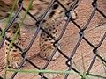 Oaklawn Farm Zoo, May 16 2009 (3539737346).jpg