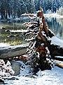 Old Man Down, Tioga Lake, Yosemite 2115 (31706721330).jpg