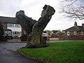 Old tree - geograph.org.uk - 1080639.jpg