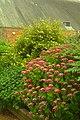 Orangery Hydrangeas.jpg