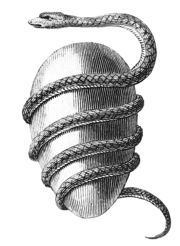 Orphic-egg