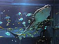 Osaka Aquarium Kaiyukan (5262933558).jpg