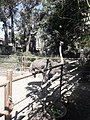 Ostrich20171111 121918.jpg