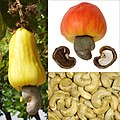 Owoce Nanercz.jpg