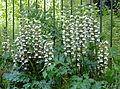 P1260497 Paris XV jardin hopital Vaugirard fleurs rwk.jpg