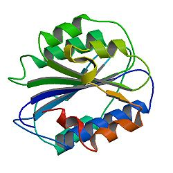 PBB Protein VWF image.jpg
