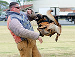 PMO K-9 unit conducts bite training 150415-M-TH981-002.jpg