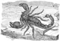 PSM V51 D411 Rock scorpion.png
