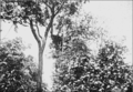 PSM V77 D092 White headed eagle nest of the first year 1900.png