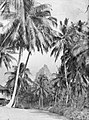 Palm trees by a house with a mountain in the background (AM 79689-1).jpg
