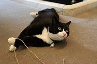 Palmerston (26341788971).jpg