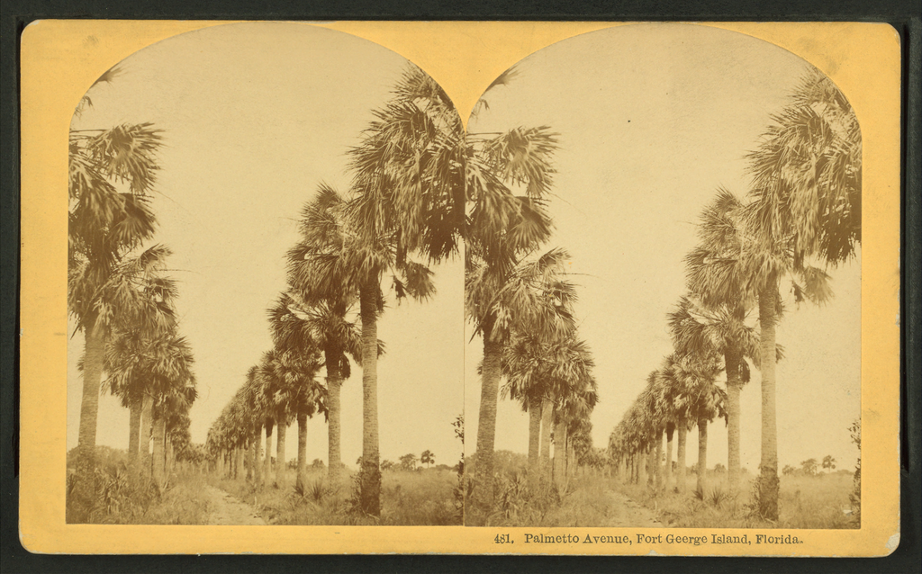File:Palmetto Avenue, Fort George Island, Florida. (no.481), by ...