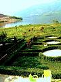 Pamje e liqenit te Fierzes..jpg