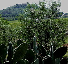 Paesaggio rurale nei dintorni di Montiano