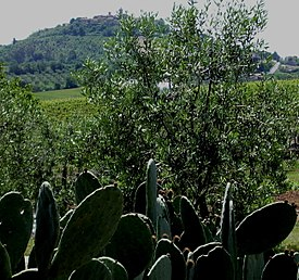 Panorama Montiano (GR).jpg
