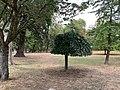 Parc Lefèvre - Livry Gargan - 2020-08-22 - 7.jpg