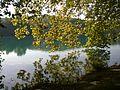 Parc tete or lac arbre reflet.jpg
