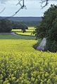 Parcelle de colza Ile de France-3-cliche Jean Weber (23307044519).jpg